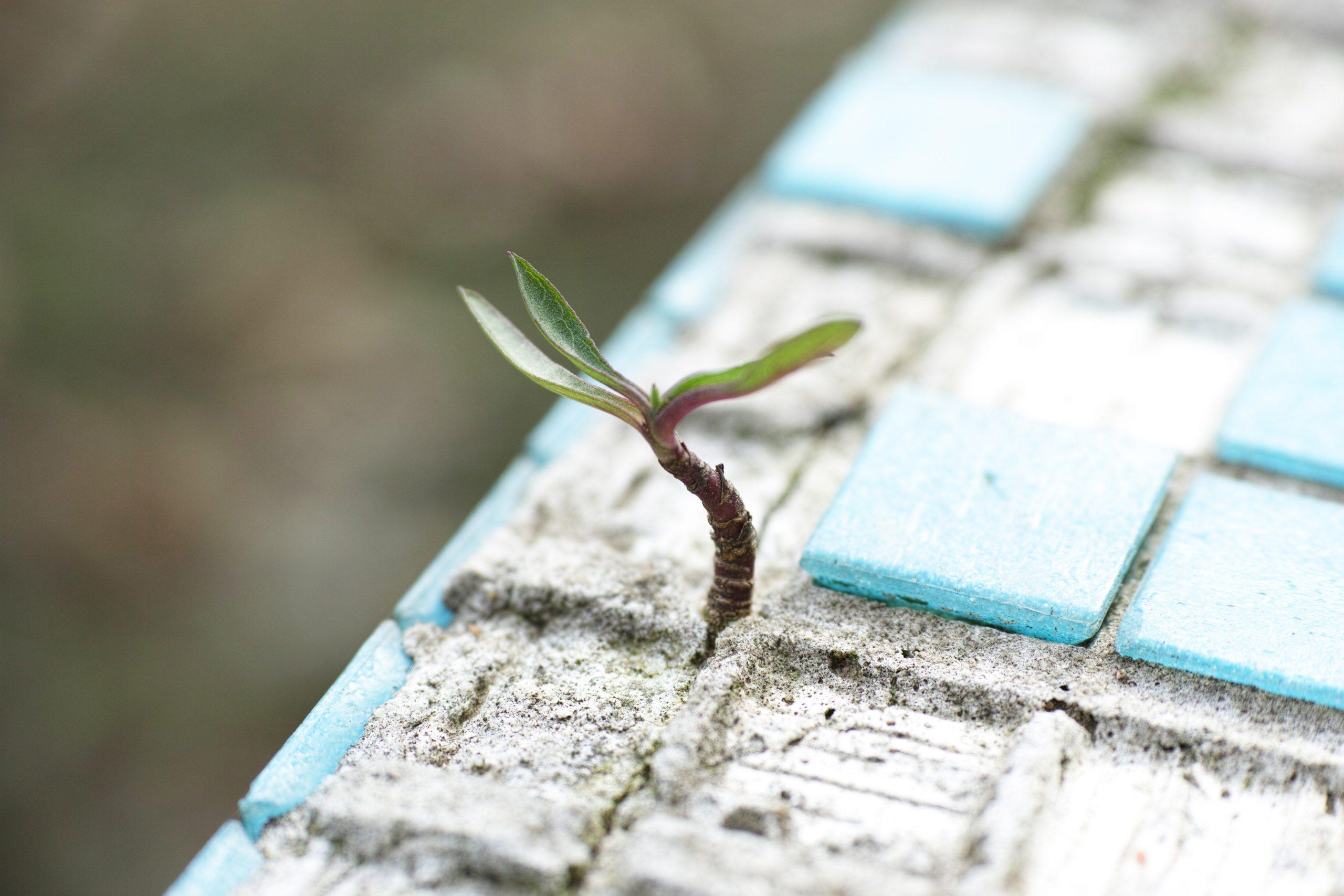 Crescita personale sostenibile. Benessere anche nelle crisi.